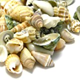 Lot of 50 Small Assorted Whole Sea Shell Seashell Charms and Beads with Holes