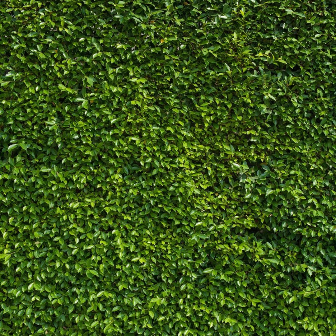 8x8 ft Nature Green Leaves Backdrops, Cotton Microfiber Photography Birthday Green Lawn Background for Wedding, Birthday Party, Newborn Photo Props by Basifoto