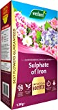 Westland Sulphate of Iron Plant Food for Ericaceous Plants, 1.5 kg