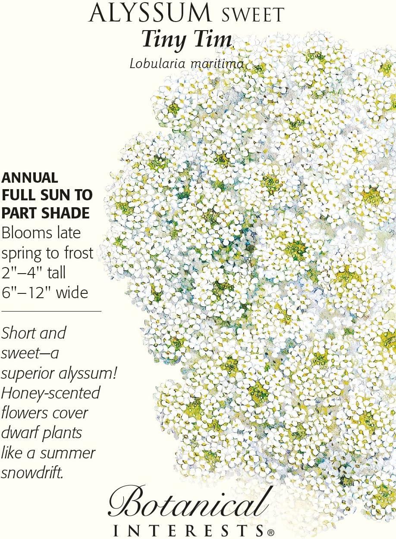 ALYSSUM ORIENTAL NIGHT 50 SELF SOWS TO PERENNIAL DEER RESISTANT FLOWER SEEDS