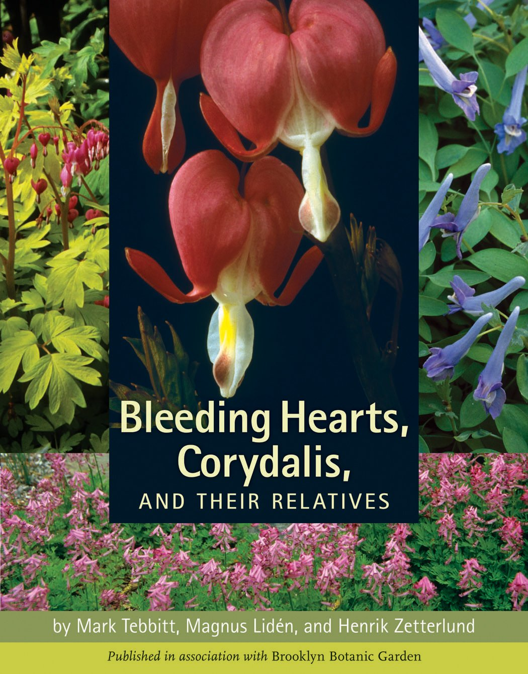 Bleeding Hearts, Corydalis, and Their Relatives