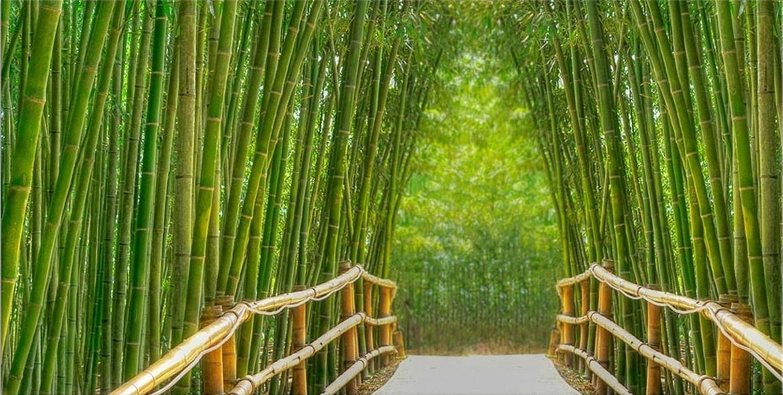 Startonight Canvas Wall Art Bamboo Alley, Green USA Design for Home Decor, Dual View Surprise Artwork Modern Framed Ready to Hang Wall Art 23.62 x 47.2 Inch 100% Original Art Painting!