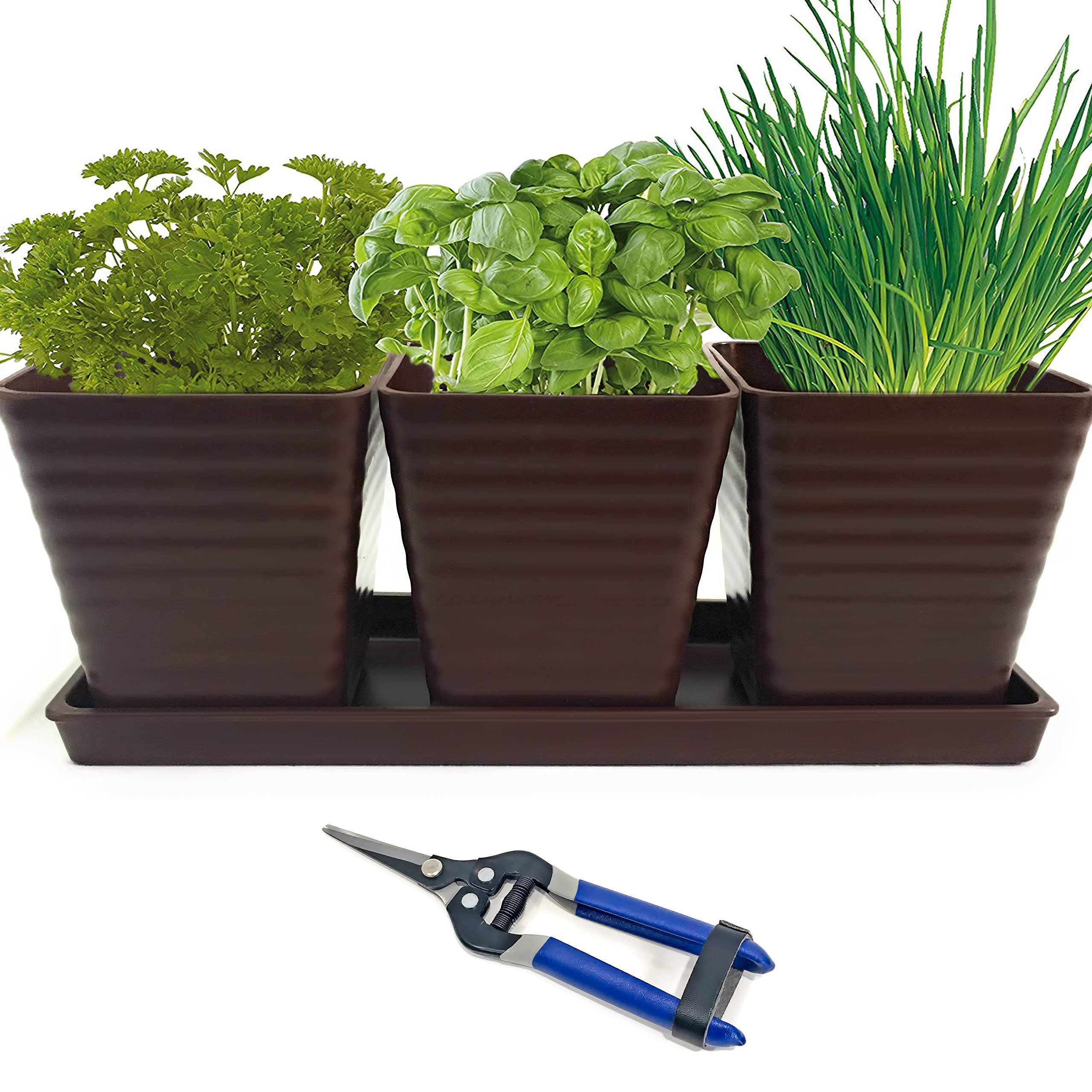 Grow 5 Herbs with Burpee's Herb Garden Starter Kit and Garden Snips Bundle Complete Kit with Everything Needed to Grow Indoor Culinary Herbs in Brown Bamboo Planter Basil Parsley Chives and Cilantro