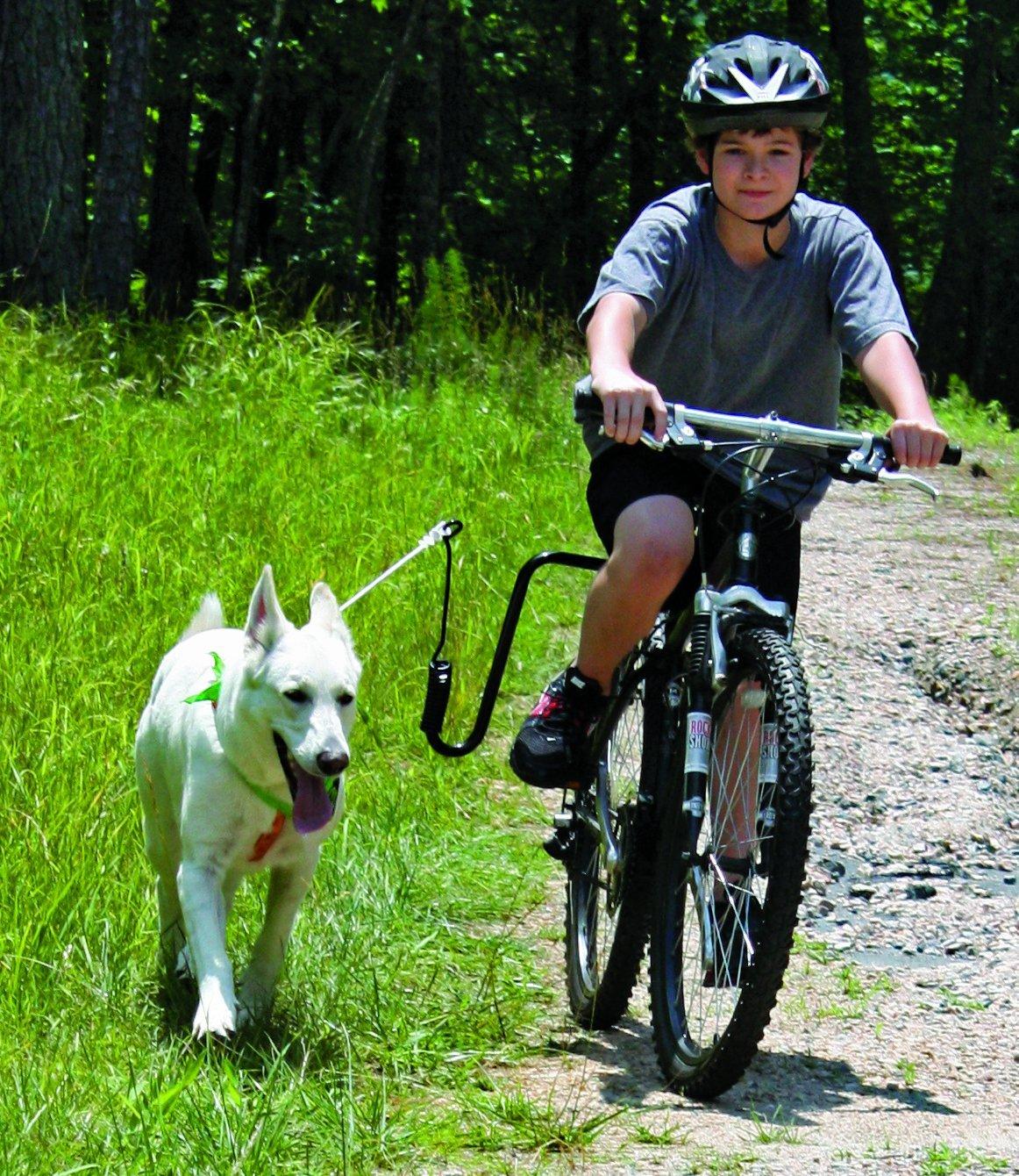 Springer Dog Exerciser Springer Dog Exerciser Pet