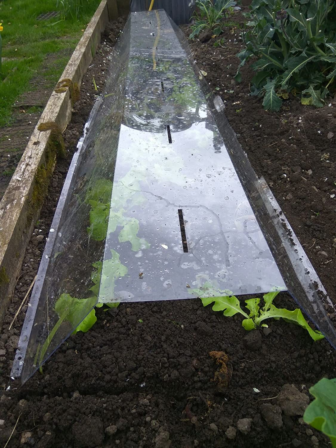 Clear cloche - high quality polycarbonate polytunnel / mini greenhouse SGR