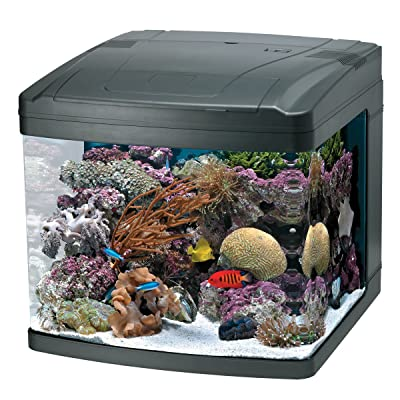 Oceanic 82052 BioCube 29 Gallon Aquarium Review