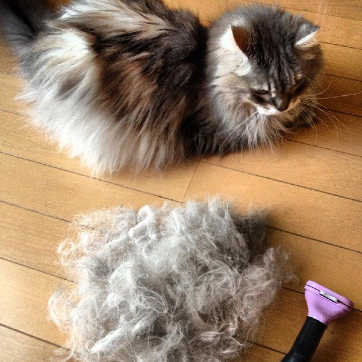 FURminator Long-Hair deShedding Tool for Cats, Brush for Cats, Kittens [Misc.] by Furminator