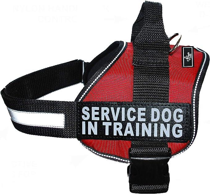 Doggie Stylz Service Dog in Training Vest