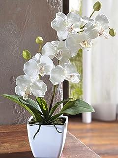 orchidee blanche sonorisation
