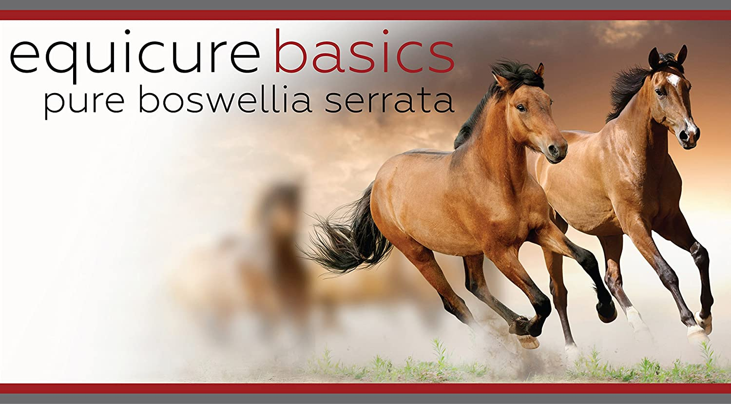 Equicure Pure Boswellia Serrata - Natural Anti-Inflammatory and Pain Relief  For Horse/Pony (1KG)