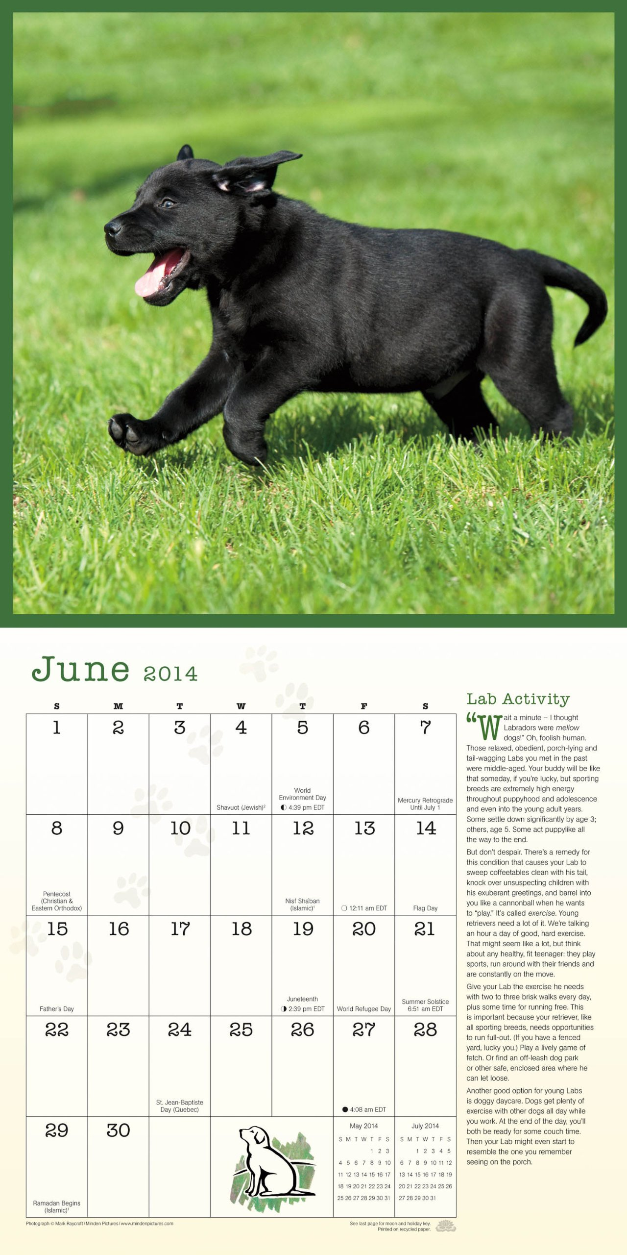 Healthy Lab A Year Of Healthy Tips For Your Labrador Retriever - 26 dogs puppyhood photos