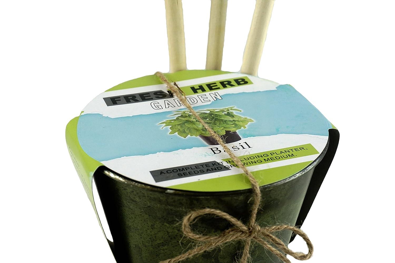 Amazon.com : Fresh Basil Herb Garden Kit with Planter & Mini ...