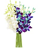 KaBloom Starry Night in the Tropics Bouquet of Blue and White Orchids from Thailand