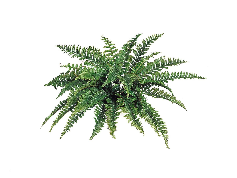 "Larksilk Boston Fern Artificial Plants - UV Resistant, Indoor or Outdoor Plant, Hanging Basket or Planter, 34"" Inch Diameter 42 Fronds"