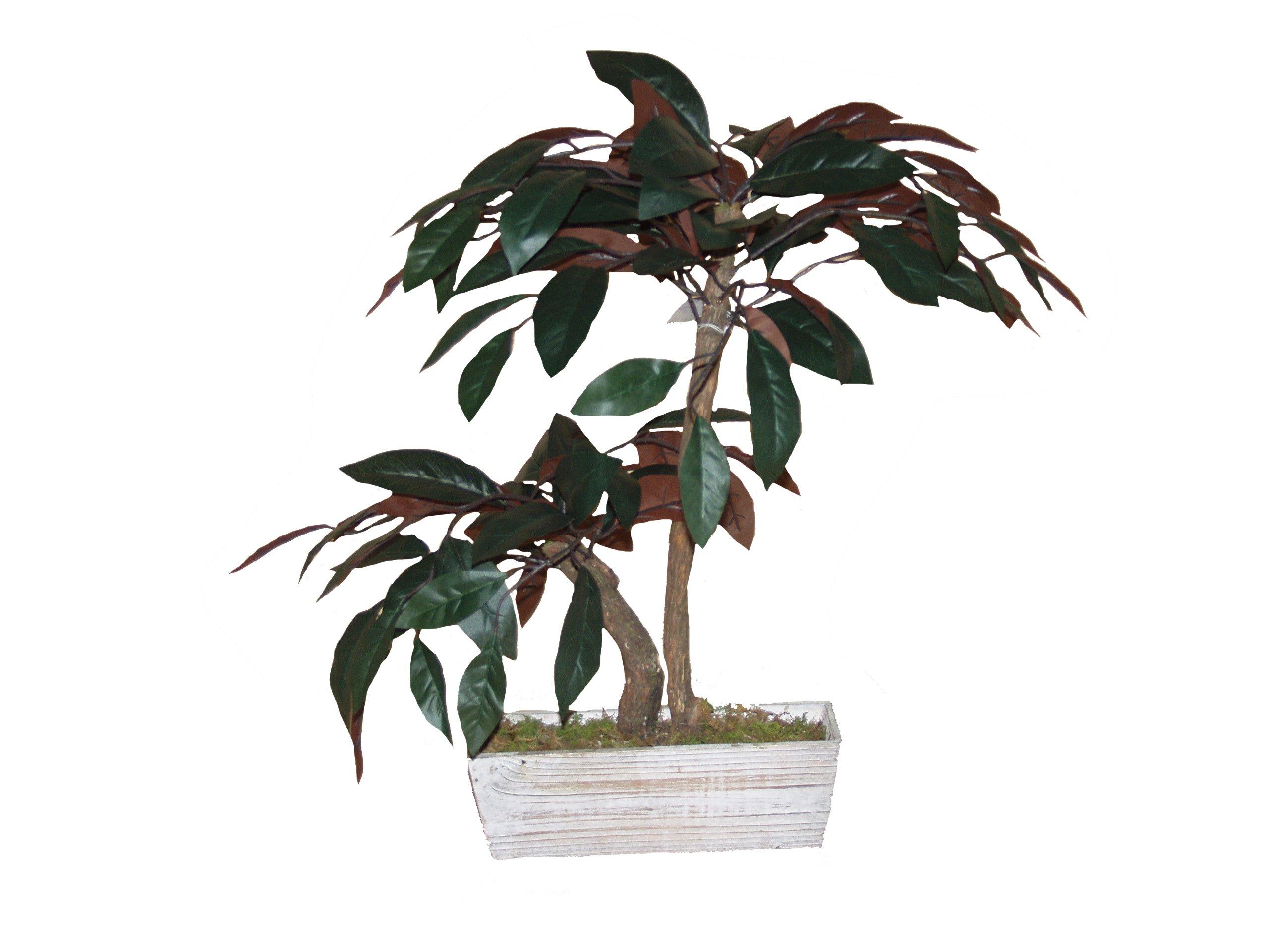 Mamone Home & Garden H Mini Magnolia Leaf Tree in Wood Planter, 28''