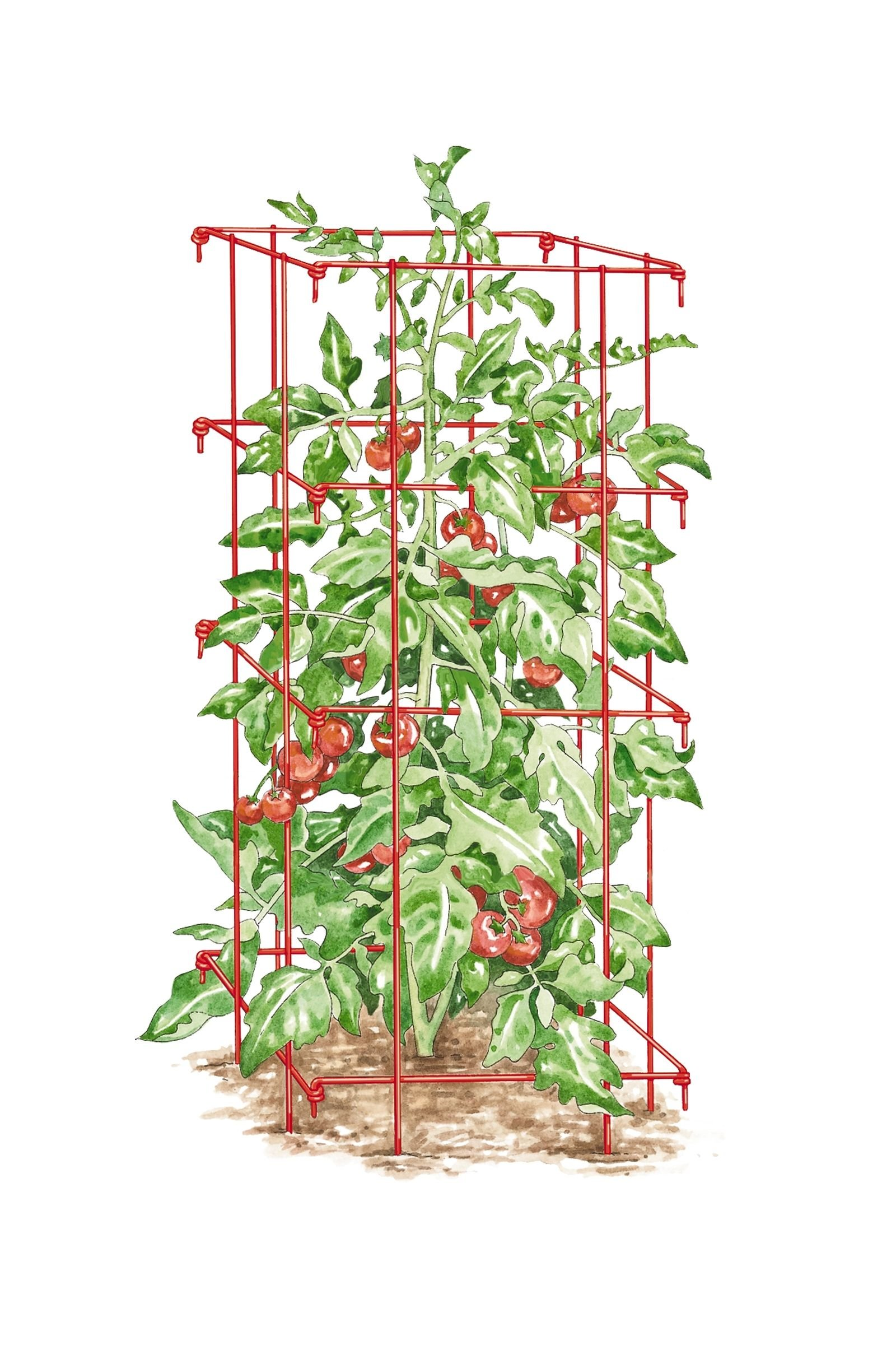 Gardener's Supply Company Square Tomato Cage, Single, Red