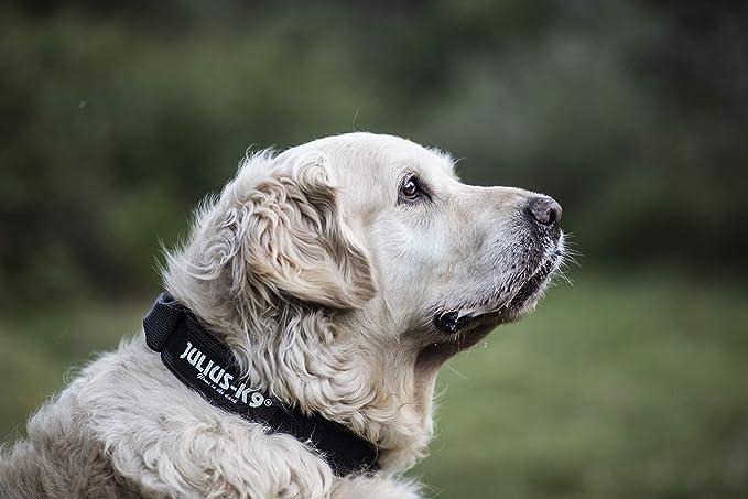 Julius-K9 - Collar para perro, Negro (Black/Gray), 50 mm*49-70 cm ...