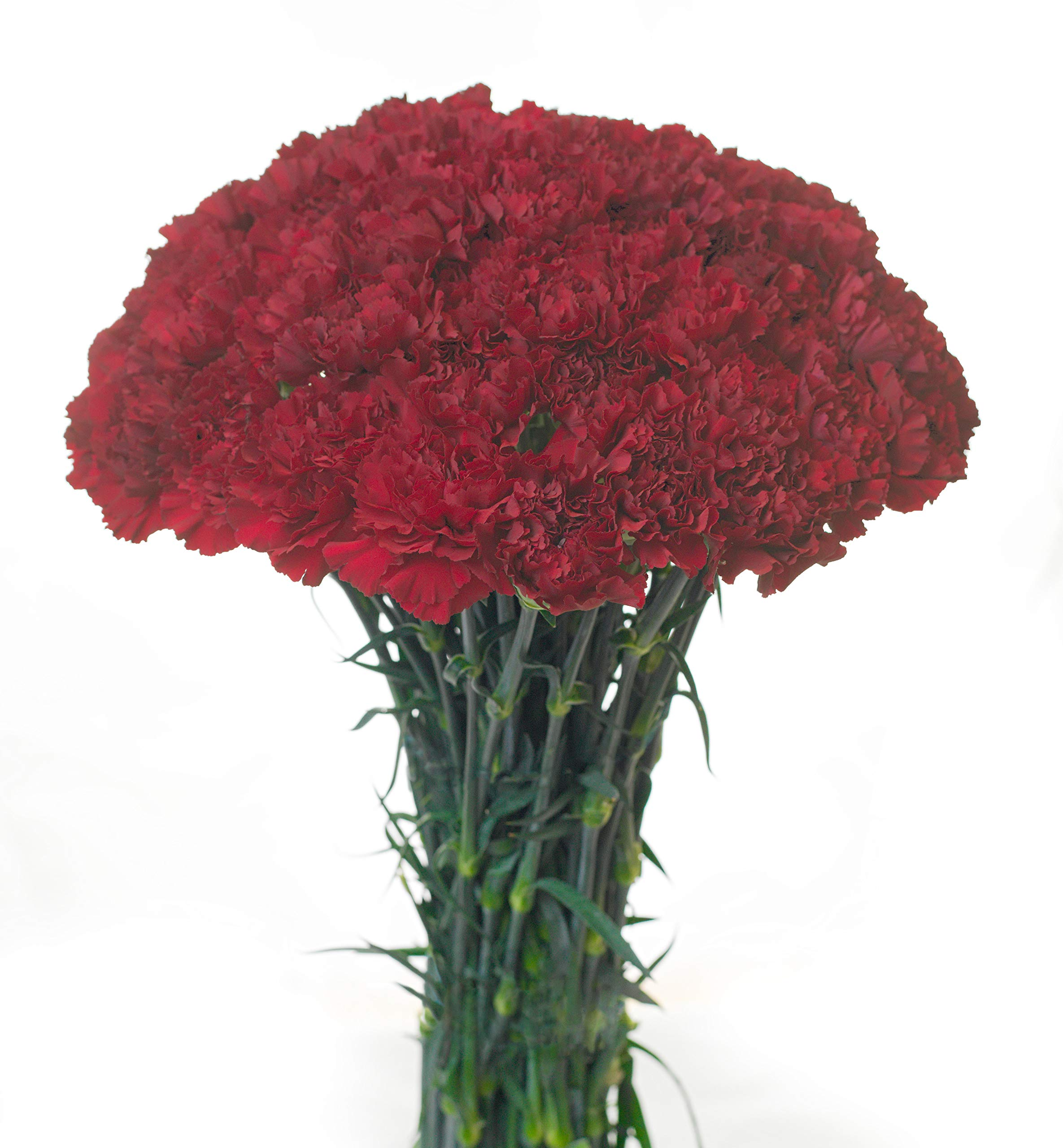 Carnations Multiple Colors and Quantities (50, Burgundy)