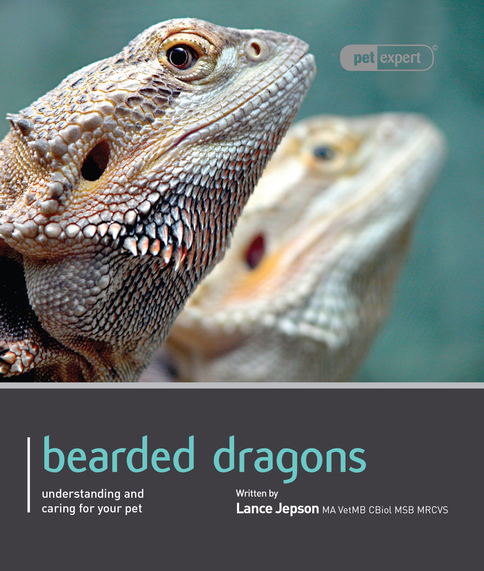 Bearded Dragon (Pet Expert): Lance Jepson: 9781907337154: Amazon.com ...