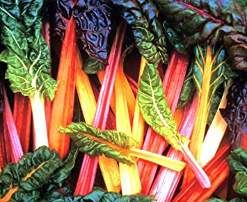 Chard Bright Lights 100 Seeds High Quality Seeds FREE P/&P