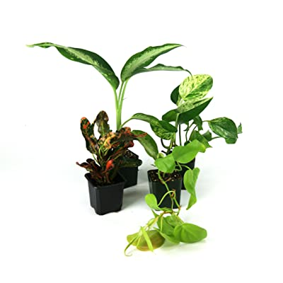 Large Crested Gecko Vivarium Plant Kit : Garden & Outdoor