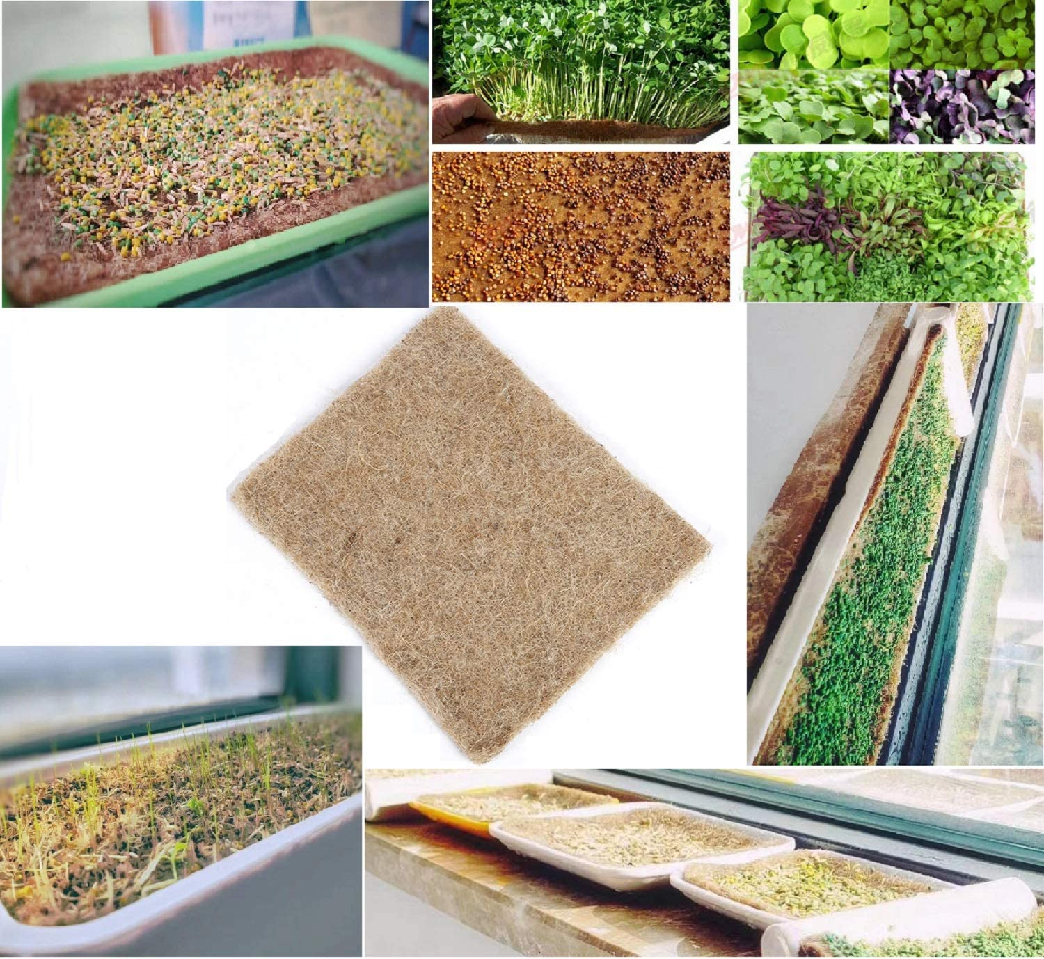 "Hydroponic Grow Pads - Hemp Grow Mat - Perfect for Microgreens, Wheatgrass, Sprouts - (Fits Standard 10"" X 20"" Germination Tray) - Environmentally Friendly, Fully Biodegradable (12)"