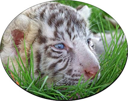 amazon com rikki knight baby white tiger in grass with bright blue