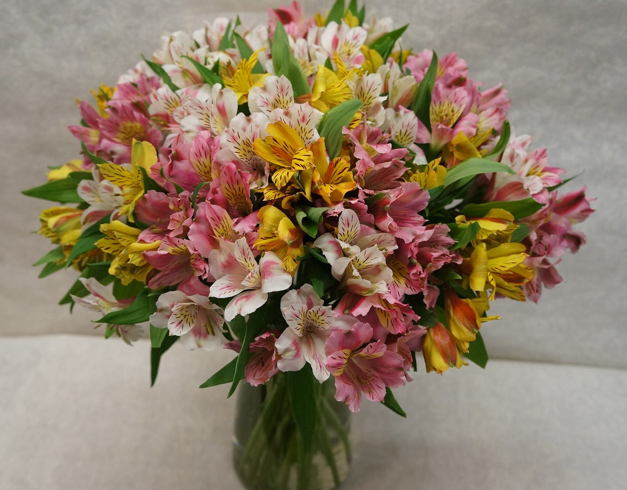 Alstromeria Peruvian Lilies (100+ Blooms with a Free Vase) by Eflowerwholesale by Eflowerwholesale