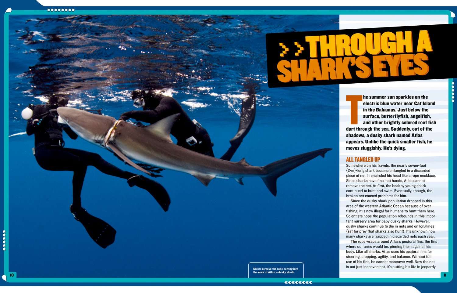 National Geographic Kids Mission: Shark Rescue: All About Sharks and How to Save Them (NG Kids Mission: Animal Rescue) by National Geographic Children's Books (Image #3)