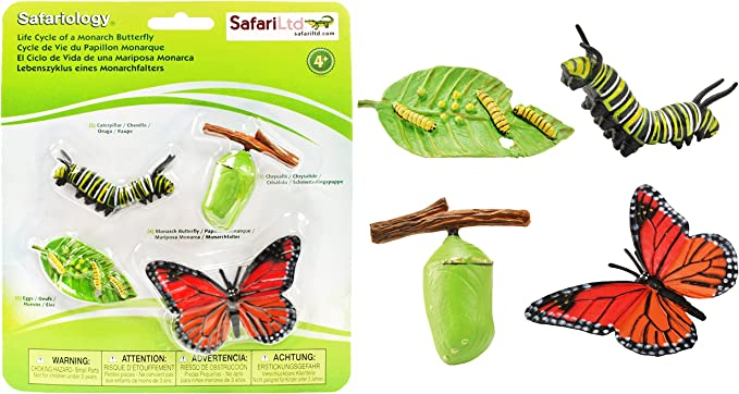 set of 4: leaf Butterfly life cycle felt playset caterpillar 2-12cm pupa butterfly eggs