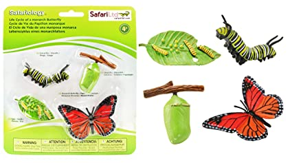 amazon com safari ltd life cycle of a monarch butterfly toys games
