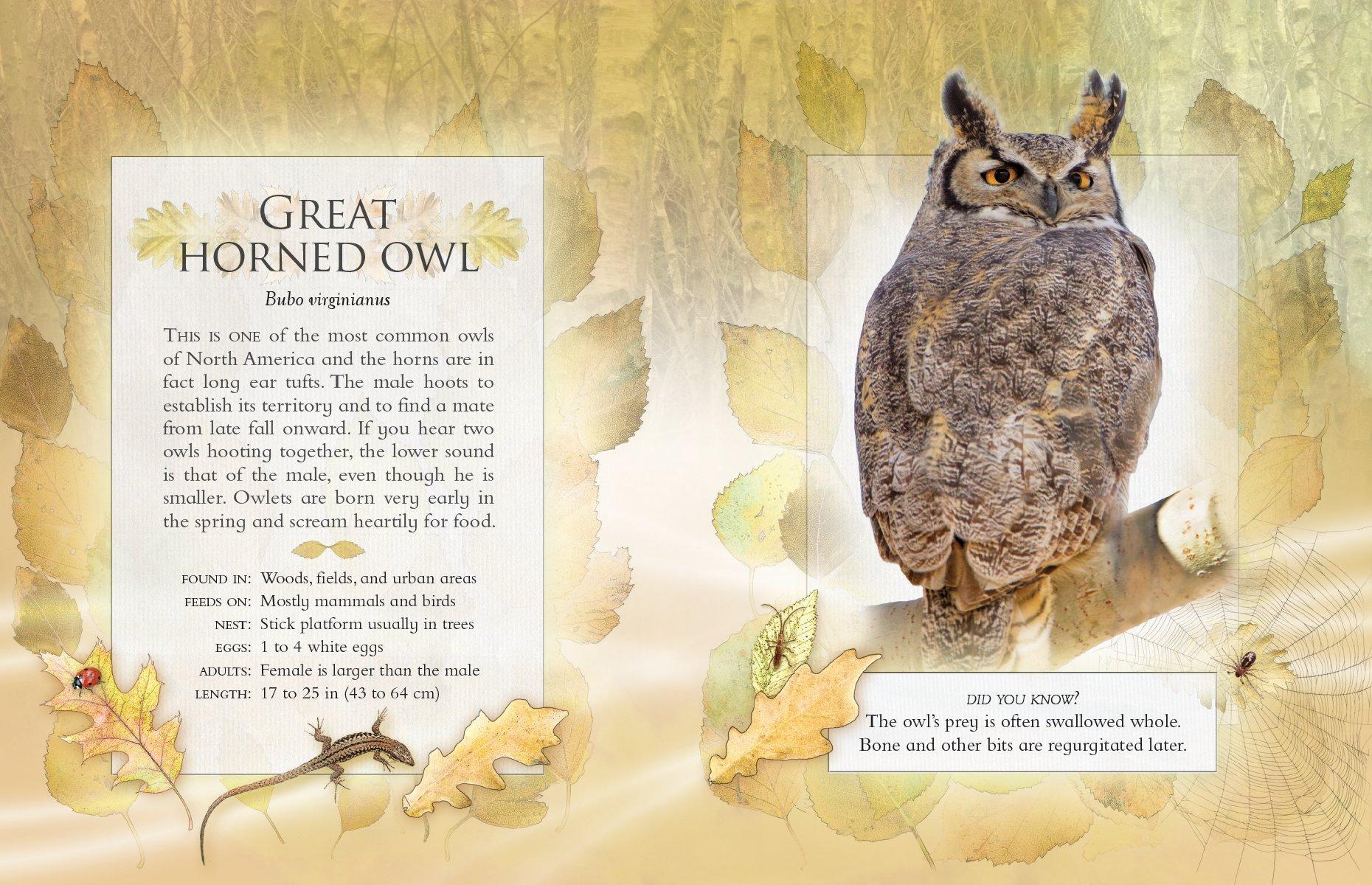 the little book of backyard bird songs andrea pinnington caz