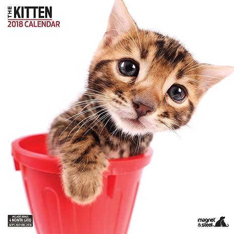 Imán y Acero de gato moderno 2018 calendario