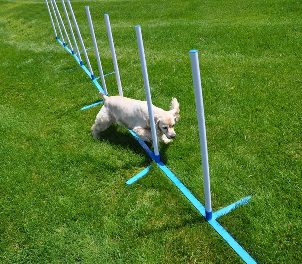 Dog running through agility weave poles