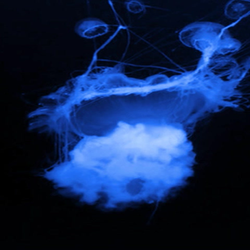 glowing jellyfish live wallpaper appstore for