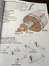 The Anatomy Coloring Book: 9780321832016: Medicine