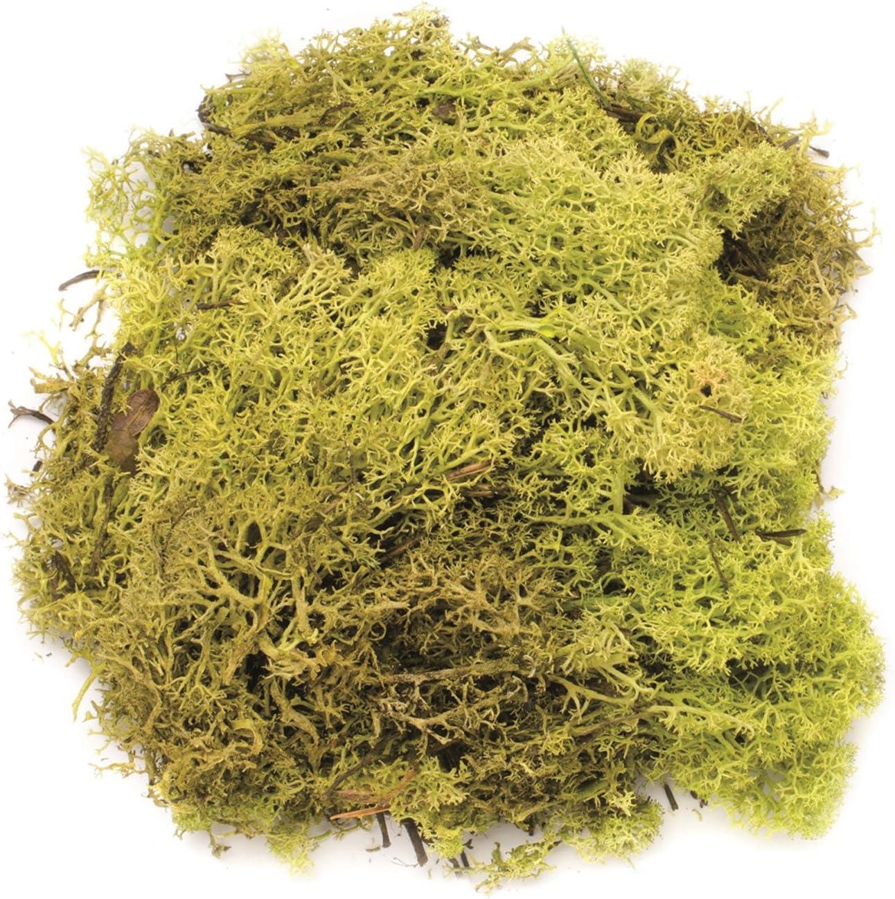 GLOREX 6 3803 606 Islandmoos Juguete Verde