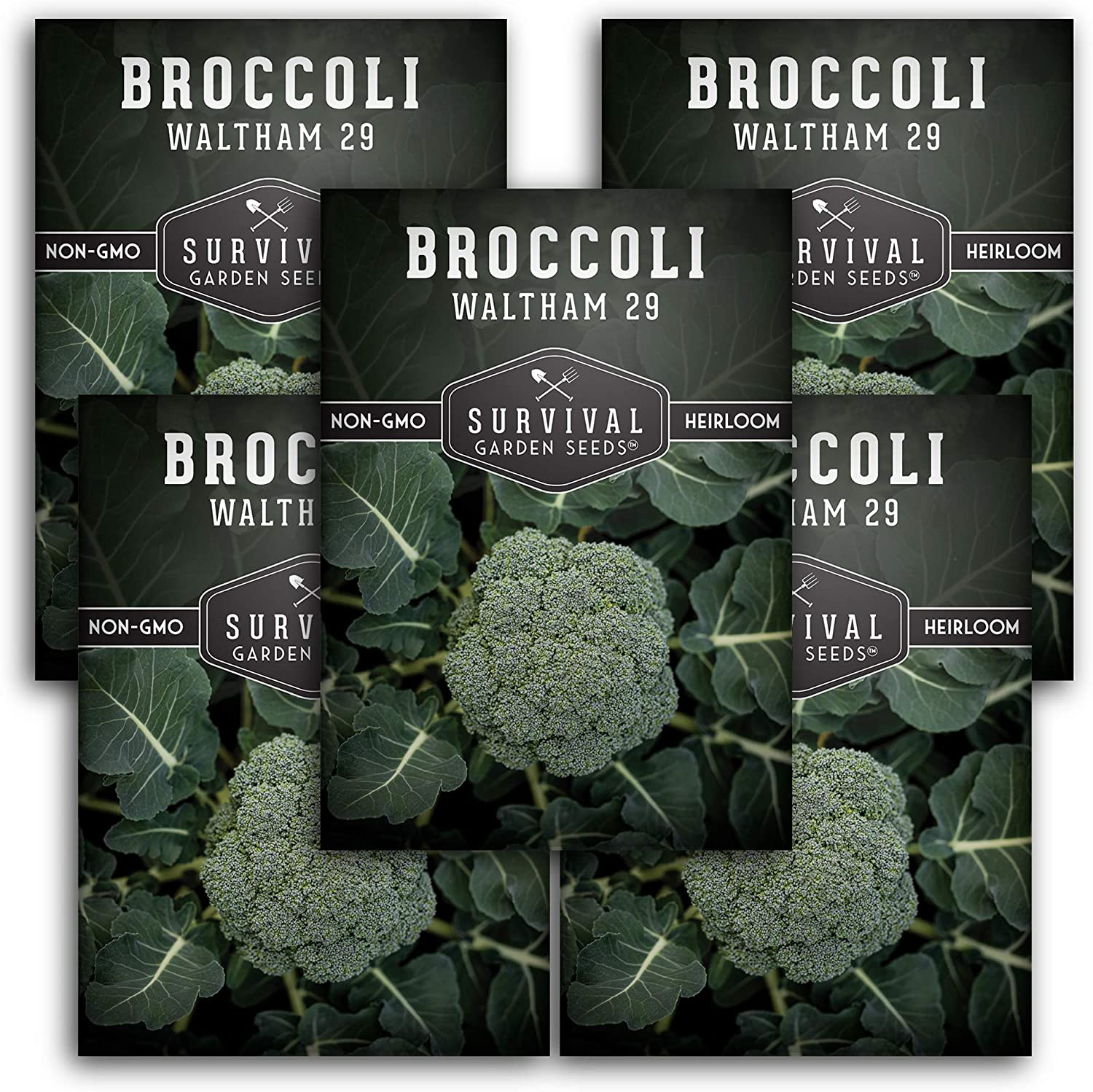 Survival Garden Seeds - Waltham 29 Broccoli Seed for Planting - Packet with Instructions to Plant and Grow in Your Home Vegetable Garden - Non-GMO Heirloom Variety