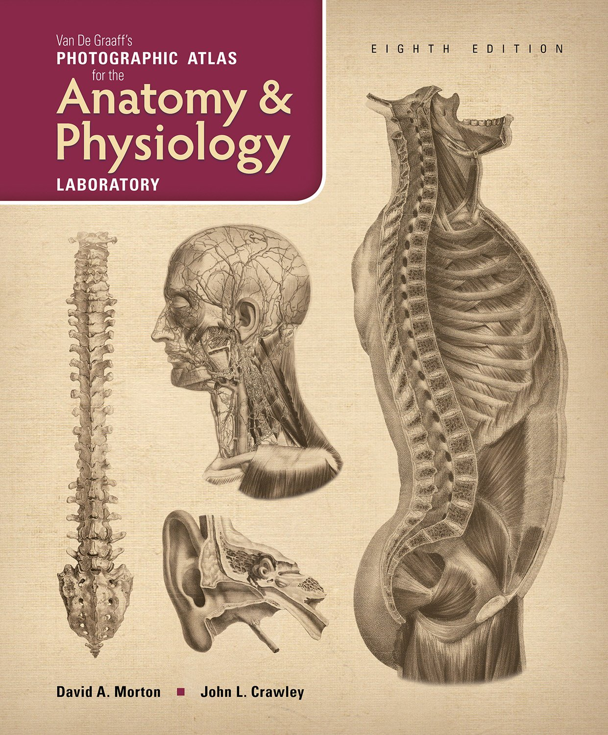 Van De Graaffs Photographic Atlas For The Anatomy Physiology