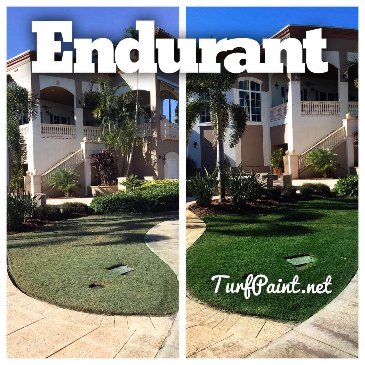 Concentrated Turf and Grass Colorant - 1 Gallon Jug Revitalizes Approximately 10,000 Sq. Ft of Dormant, Drought-Stricken or Patchy Lawn (Premium) by   Endurant (Image #4)