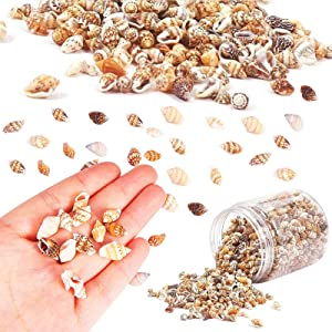 Codall 400g Tiny Sea Shells Mixed Ocean Beach Spiral Seashells Craft Charms for Home Decorations, Beach Theme Party, Candle Making, Wedding Decor, DIY Crafts, Fish Tank Vase Fille (5-12mm)