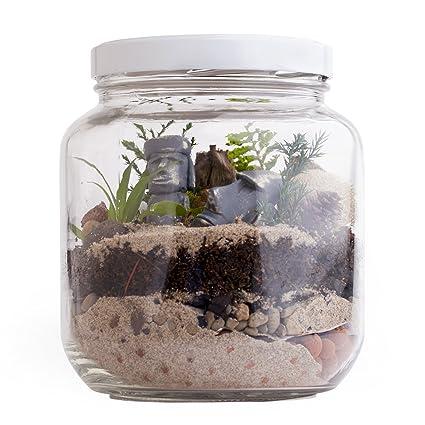 Amazon Com Tropical Terrarium Kit Diy 1 2 Gal Glass Jar Desktop