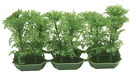 Wave Classic Cabomba Plantas Macetas, Pack de 6: Amazon.es ...