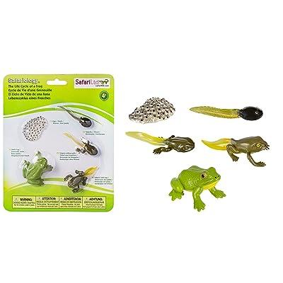 Safari Ltd Life Cycle of a Frog: Toys & Games