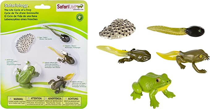 Safari Ltd. 269129 Ciclo de Vida de una Rana: Amazon.es: Juguetes y juegos
