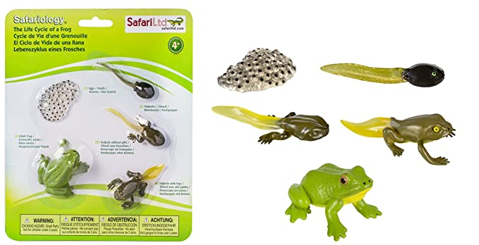 Set Ciclo della rana Safari ltd cod. 269129: Amazon.es: Juguetes y ...