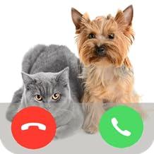 Cat & Dog Call