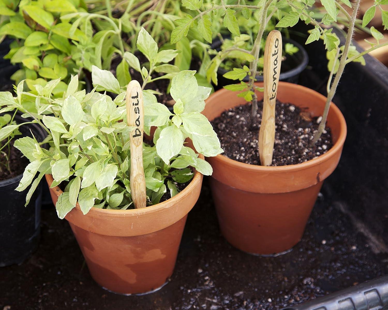 spazzolini ecologici riutilizzabili