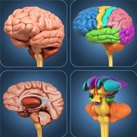 My Brain Anatomy