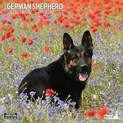 german shepherd 2018 traditional wall calendar